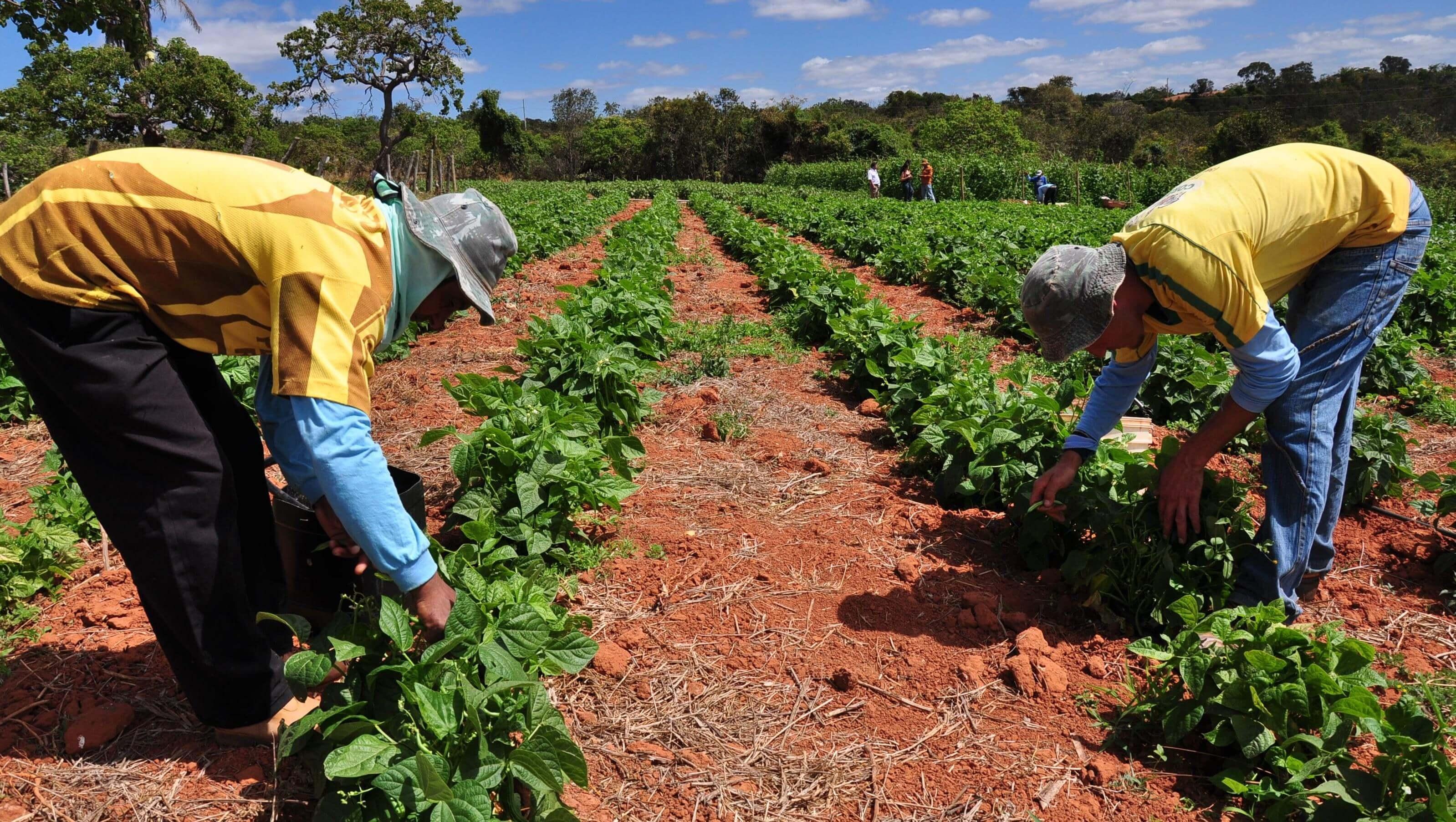 Imagem de destaque ZONA RURAL -  Prefeitura adquire mais de 300 toneladas de alimentos da agricultura familiar para beneficiar pessoas carentes