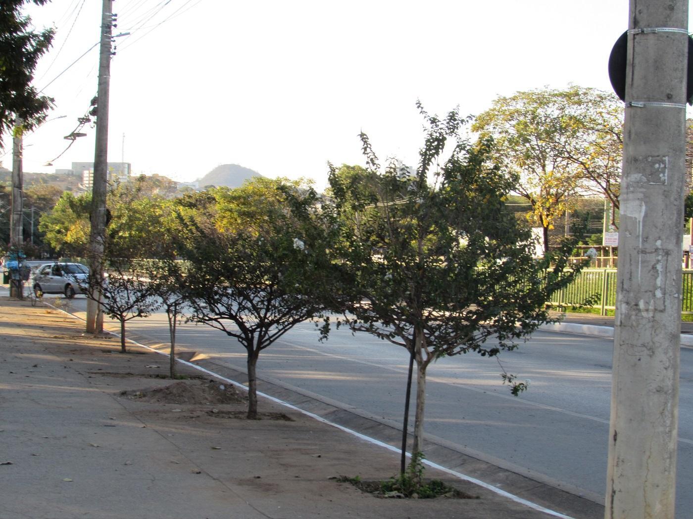 Imagem de destaque Prefeitura promove plantio de árvores adequadas ao ambiente urbano