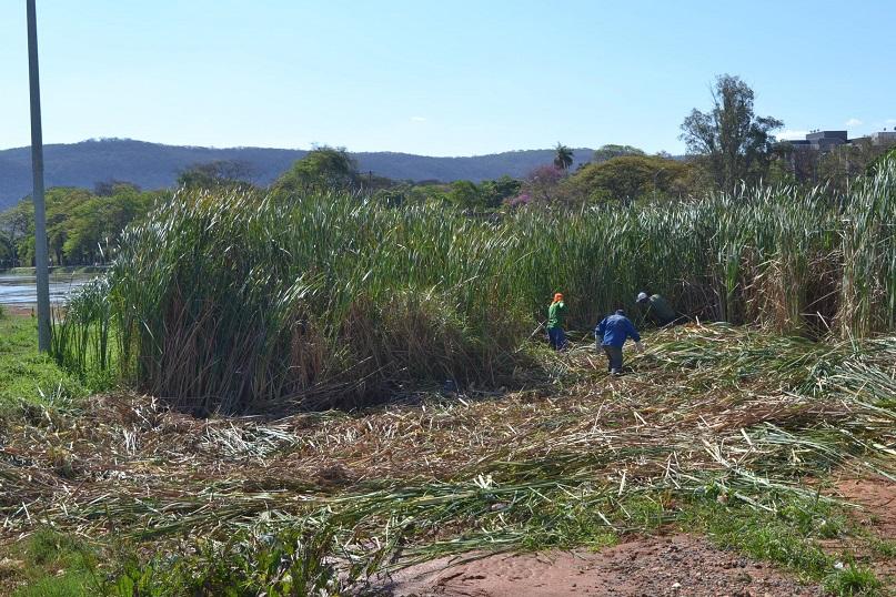 Imagem de destaque Lagoa do Parque Municipal Milton Prates é esvaziada para limpeza e remoção de tabuas