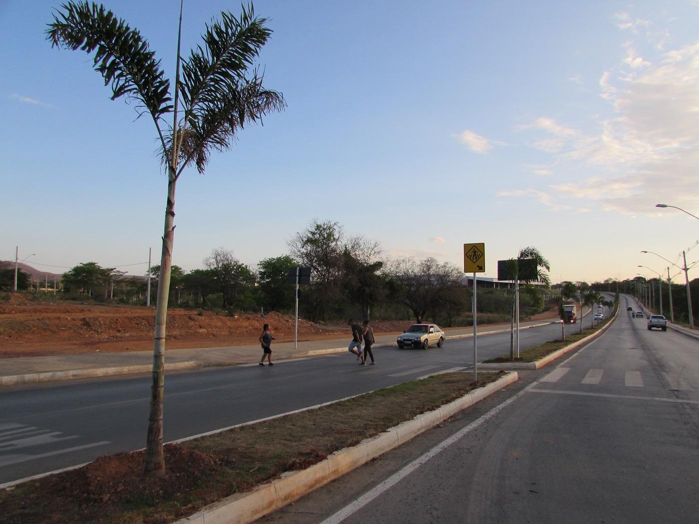 Imagem de destaque Palmeiras deixam entrada de Montes Claros cada vez mais bela