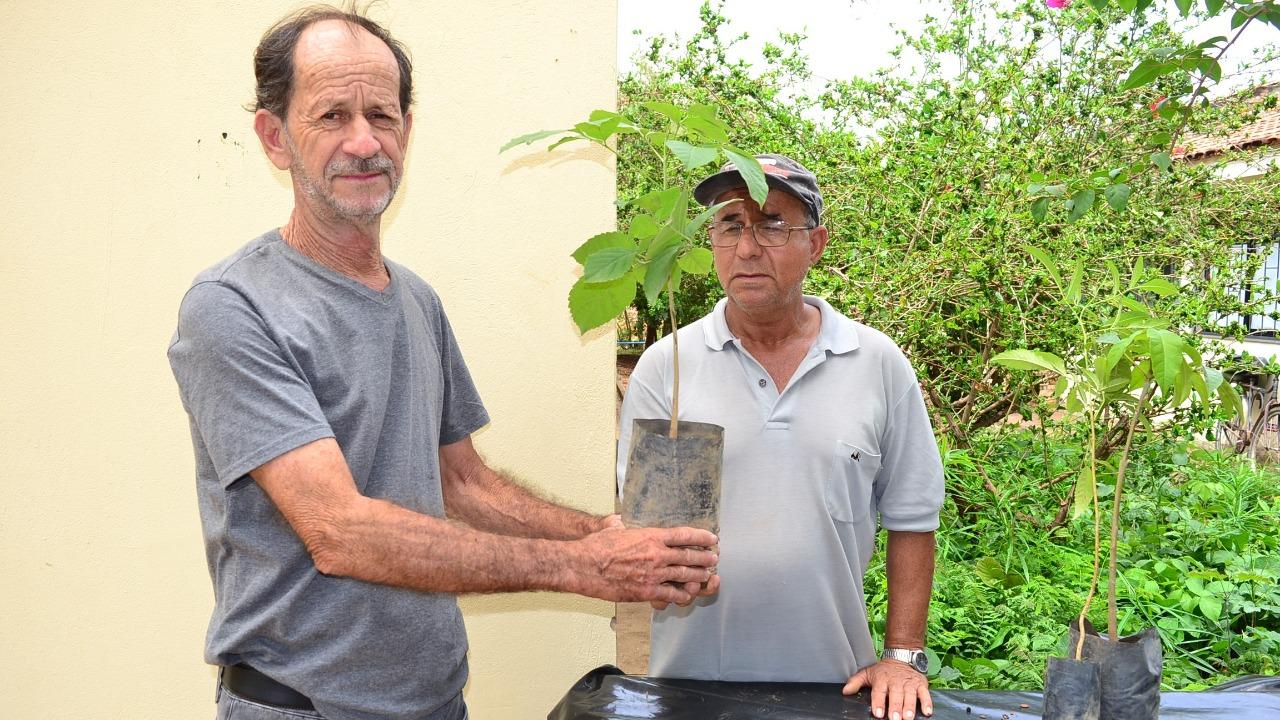 Imagem de destaque ARBORIZAÇÃO - Prefeitura distribui milhares de mudas de árvores