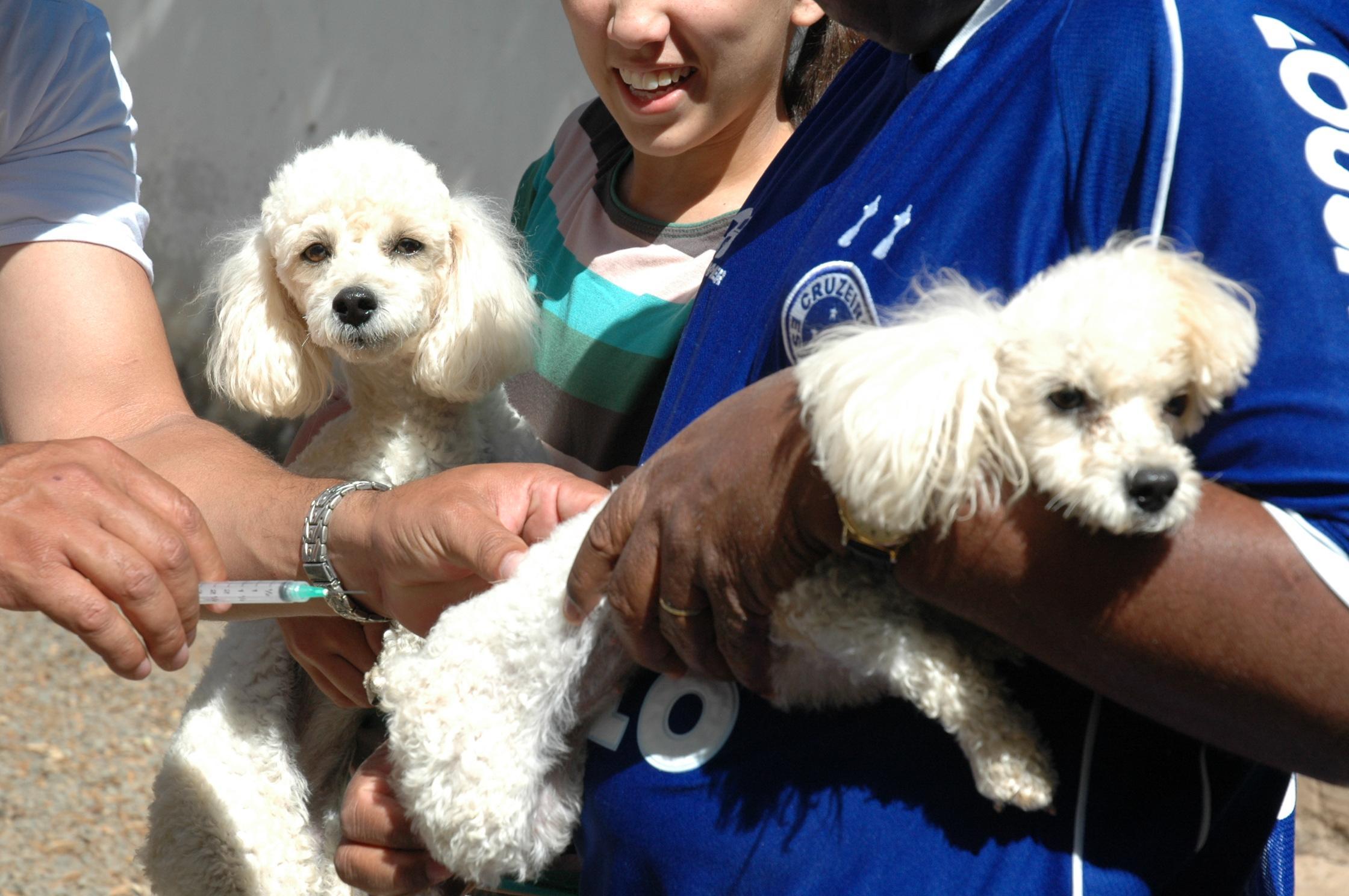 Imagem de destaque CAMPANHA DE VACINAÇÃO CONTRA A RAIVA - Prefeitura já vacinou 50 mil cães e gatos na cidade