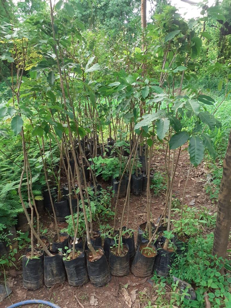 Imagem de destaque Montes Claros cada vez mais verde, bonita e sustentável, e com qualidade de vida