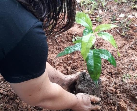 Imagem de destaque Parques de Montes Claros recebem milhares de mudas frutíferas