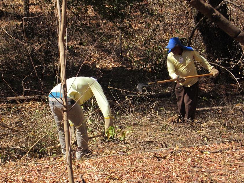 Imagem de destaque Prefeitura inicia recuperação do Parque da Sapucaia