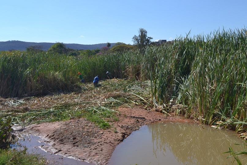 Imagem de destaque PRIMEIRA VEZ EM 50 ANOS - Lagoa do Parque Municipal será totalmente desassoreada